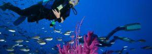 Plongée sous-marine à Porto Vecchio et Bonifacio
